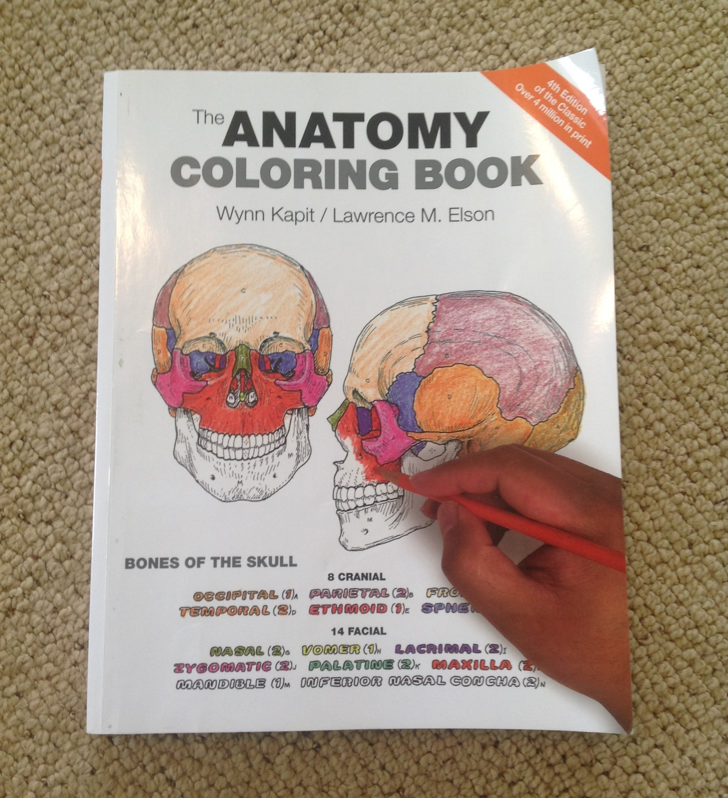 Human anatomy coloring book 4th edition coloring pages Kaplan anatomy coloring book 6th edition