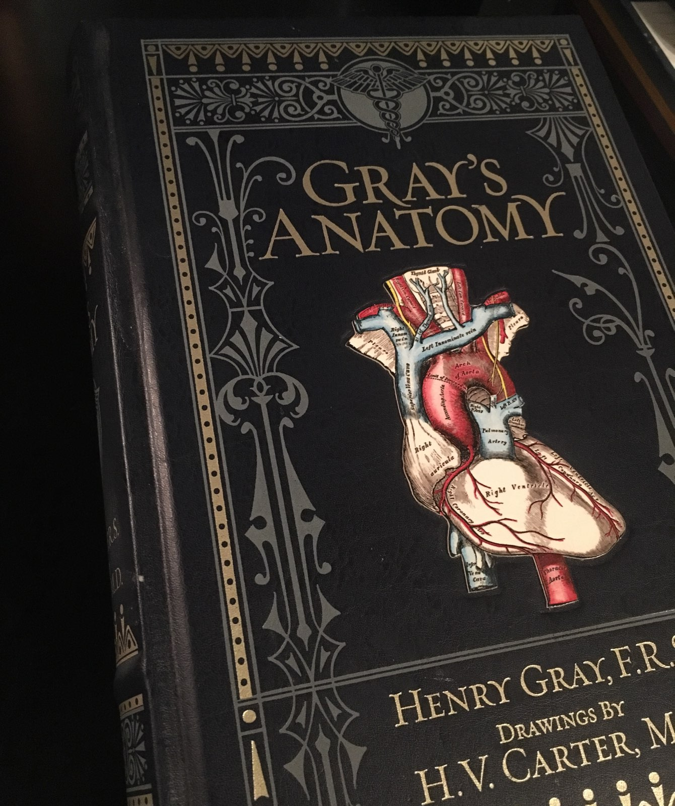 Gray\'s Anatomy Reprint - Mercari: BUY & SELL THINGS YOU LOVE