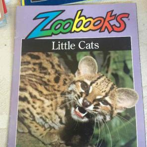 Zoobooks Little Cats for sale